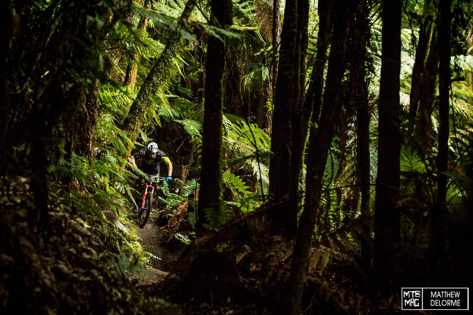 The woods were dark and sick this morning when the riders set out on stage one.