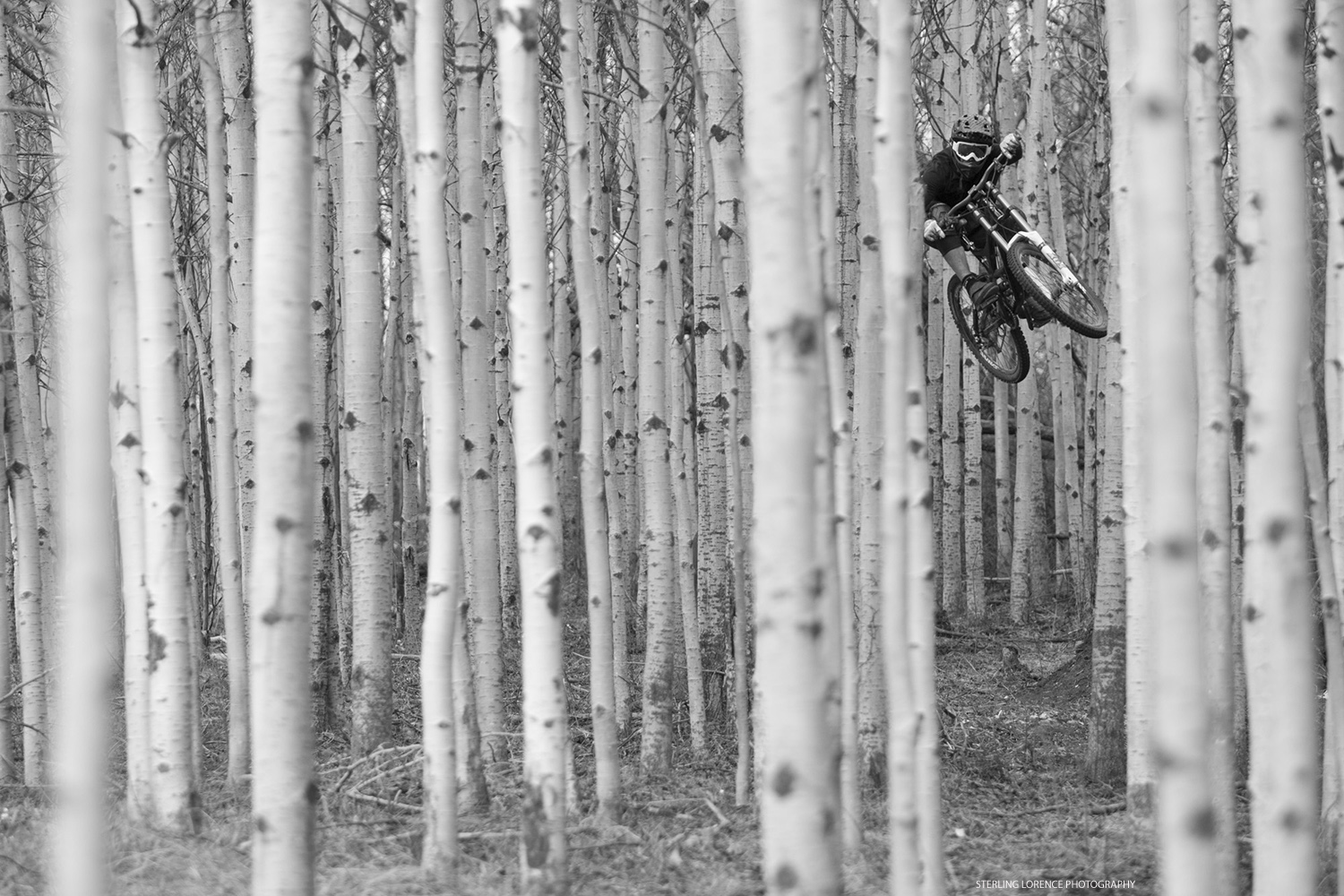 matt hunter jumping through aspen trees in kamloops, british columbia