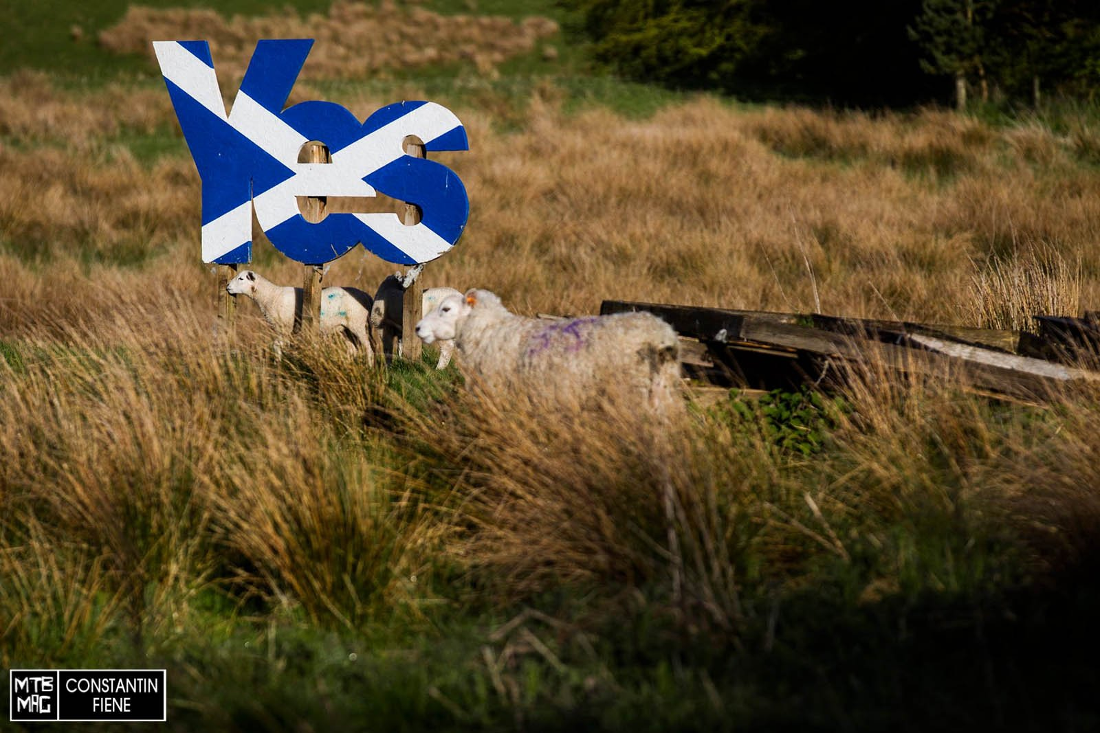 Siamo in Scozia. Non si vede il whisky, ma da qualche parte c'è anche quello