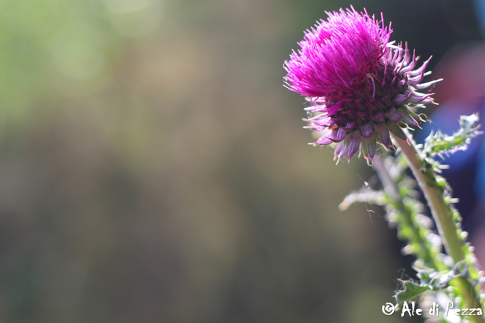 IMG_0150_res