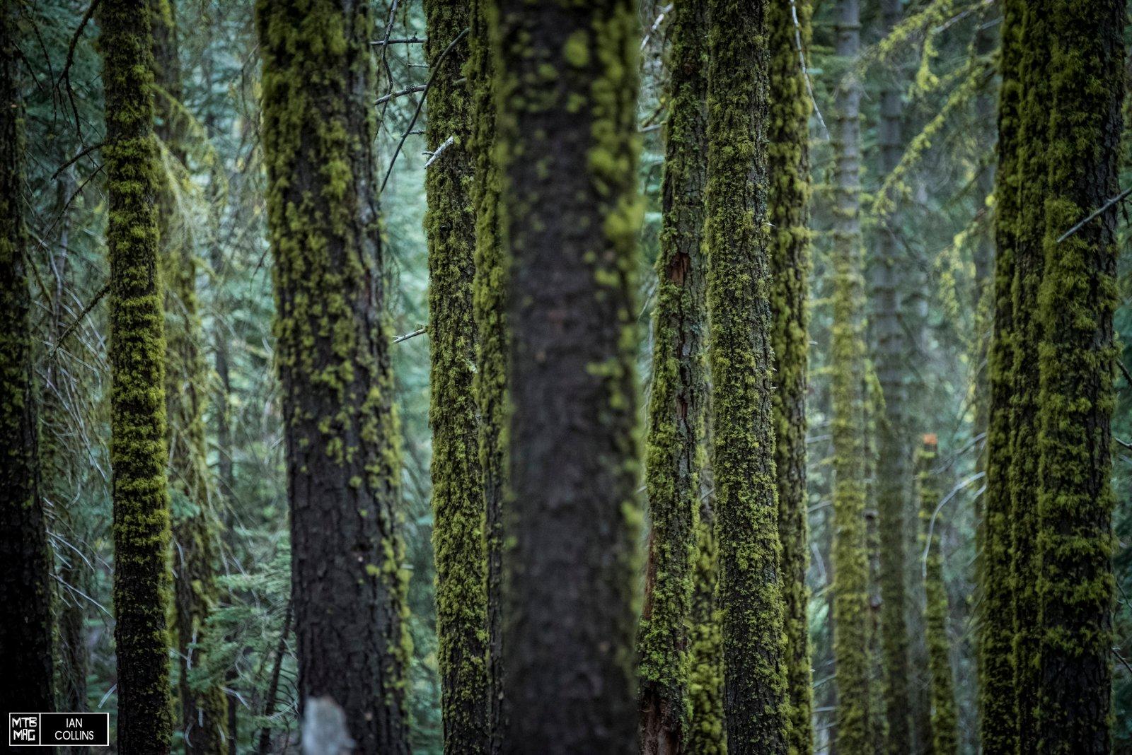 E' una regione estremamente varia: prima si schivano le rocce e un attimo dopo ci si trova tra alberi coperti di muschio. Sublime.