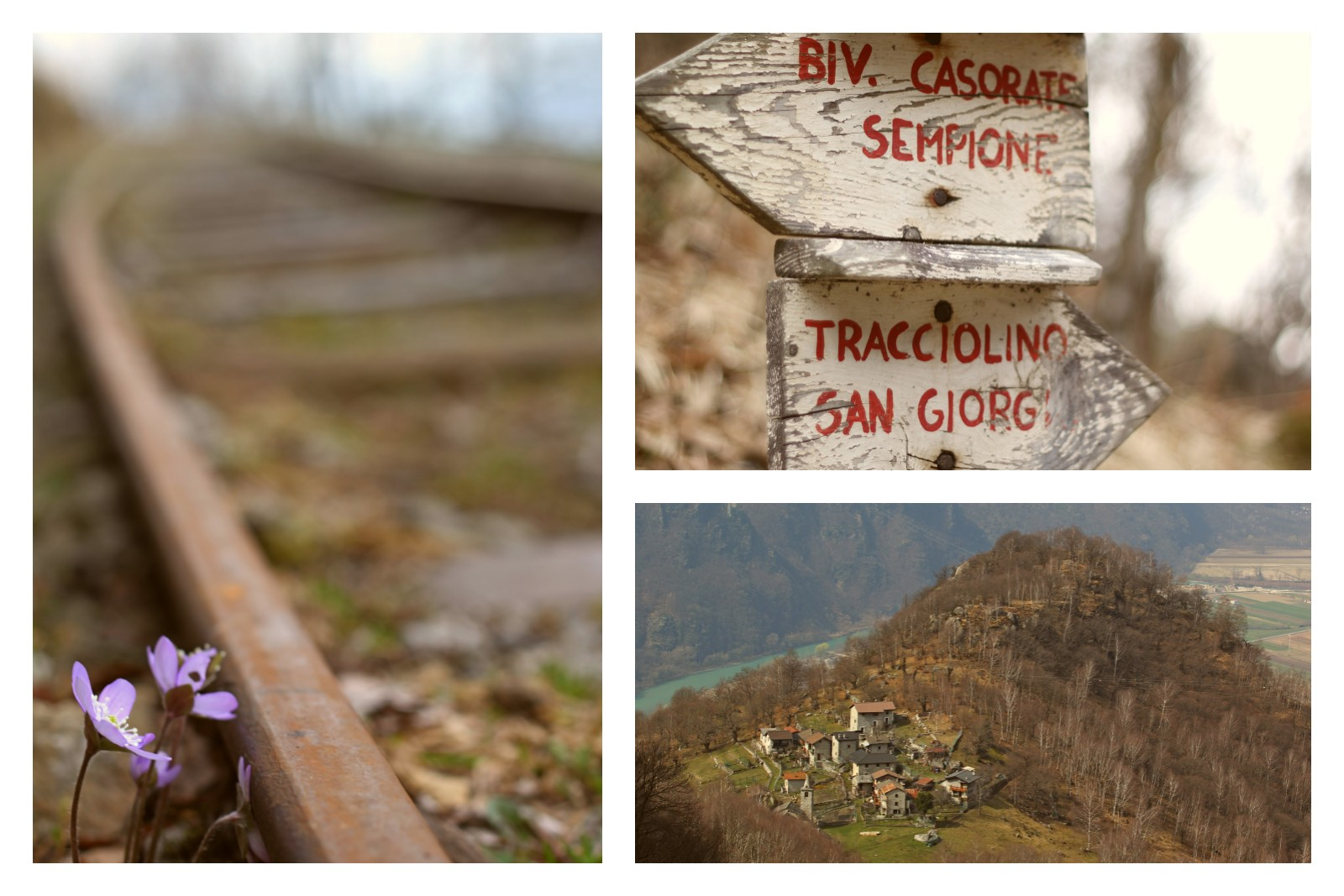 tracciolino-collage_res